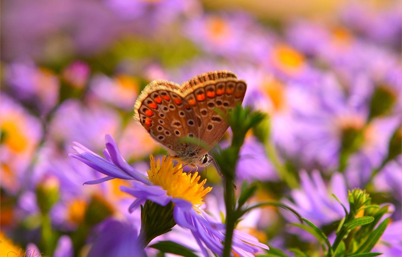 Фото обои Макро, Бабочка, Цветок, Flower, Macro, Butterfly