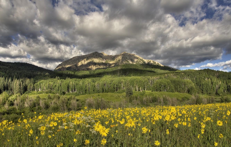 Фото обои цветы, горы, луг, жёлтые