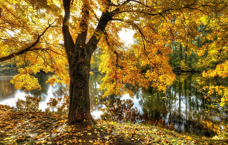 Фото обои осень, пруд, парк, Санкт-Петербург, Екатерингоф