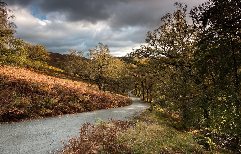 Фото обои дорога, осень, деревья