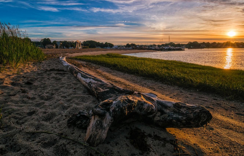 Фото обои закат, берег, коряга, водоем