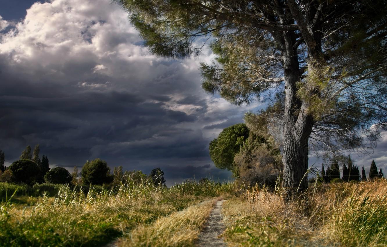 Фото обои дорога, природа, дерево