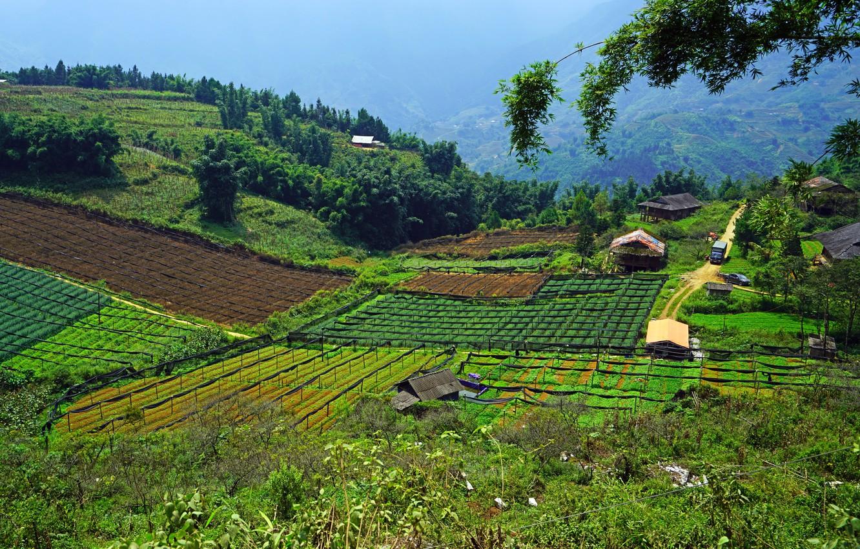 Фото обои Небо, Природа, Деревья, Поля, Nature, Sky, Вьетнам, Vietnam, Trees, Fields
