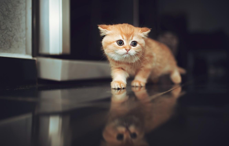 Фото обои отражение, малыш, рыжий, котёнок