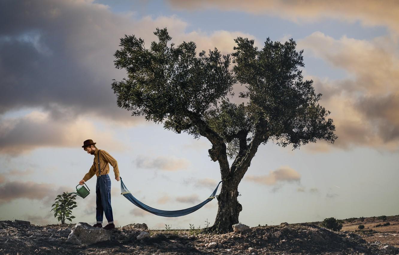 Фото обои дерево, человек, гамак