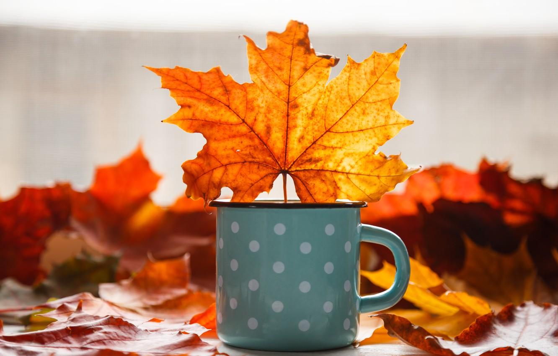 Фото обои осень, листья, фон, colorful, кружка, клен, yellow, wood, autumn, leaves, mug, maple
