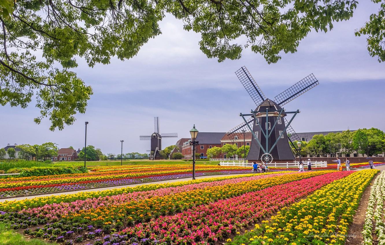 Фото обои цветы, ветки, парк, Япония, мельницы, Japan, Sasebo, Huis Ten Bosch Park, Парк Хёйс-тен-Бос, Сасебо