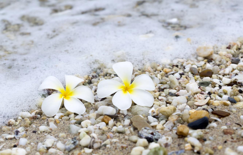 Фото обои песок, море, волны, пляж, лето, цветы, галька, камни, summer, beach, sea, sand, wave, плюмерия, plumeria, …