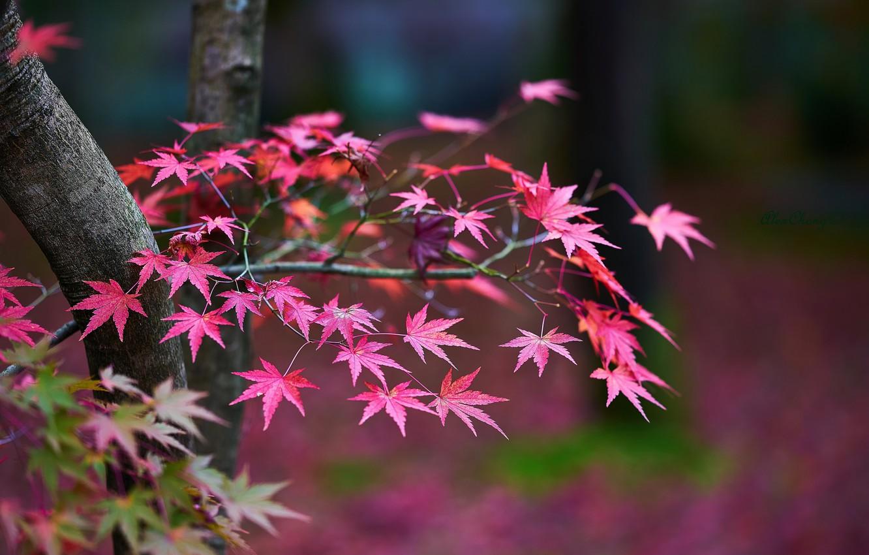 Фото обои осень, листья, деревья, ветки