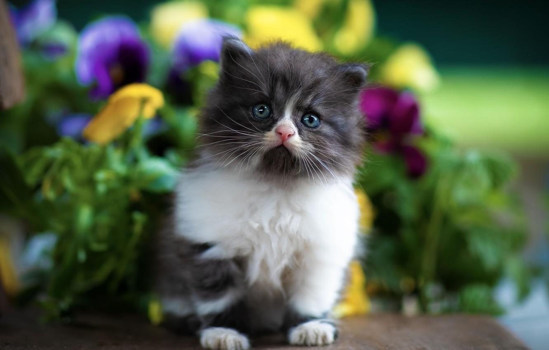 Фото обои глаза, взгляд, лапы, Котёнок