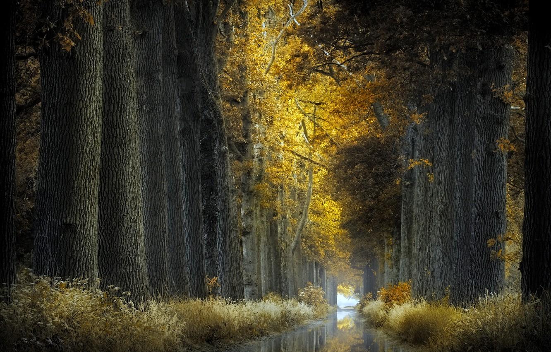 Фото обои природа, парк, канал