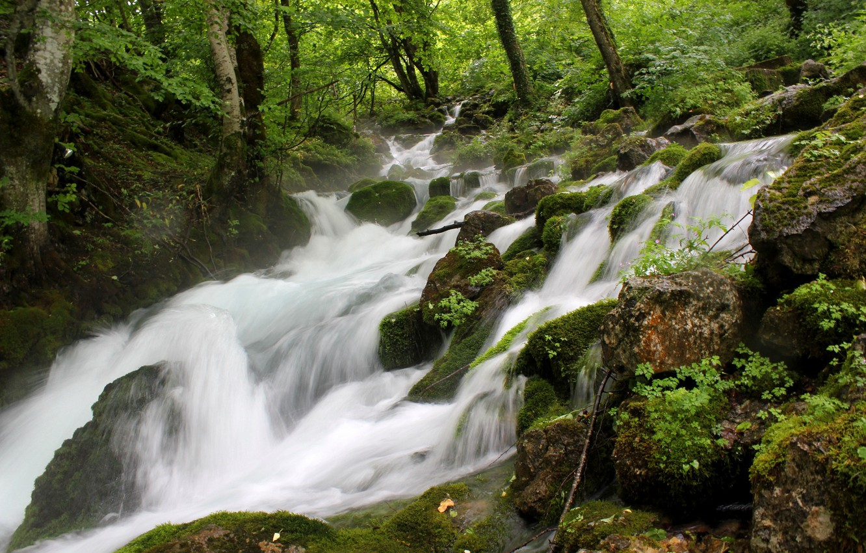 Фото обои зелень, лес, река, ручей, камни, бурный поток