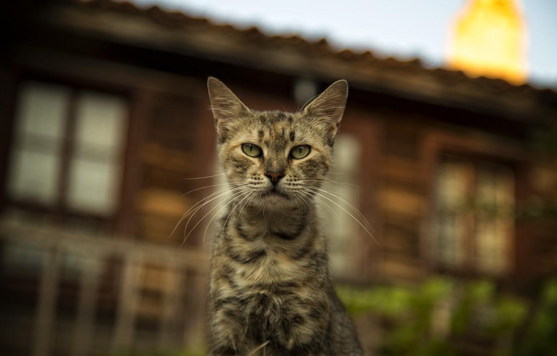 Фото обои кошки, cats wallpapers, Bulgaria, cute cat, Nessebar