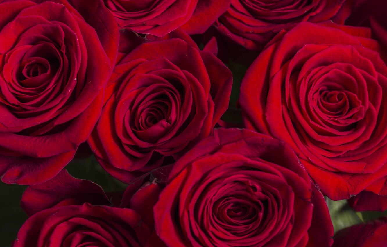 Фото обои розы, Букет, красные