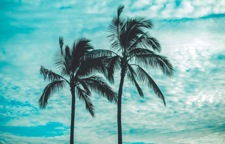 Фото обои небо, облака, пальмы, sky, clouds, palm trees