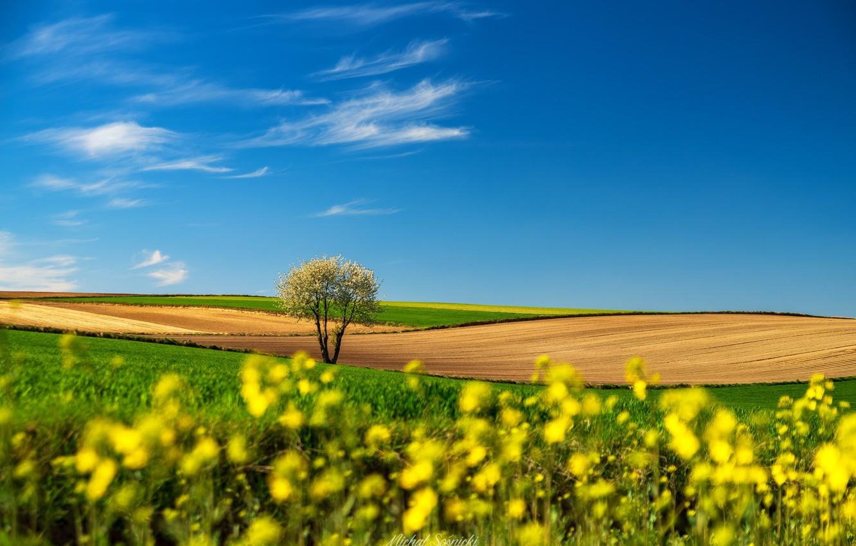 Фото обои пейзаж, природа, дерево, поля, Польша, Sośnicki Michał