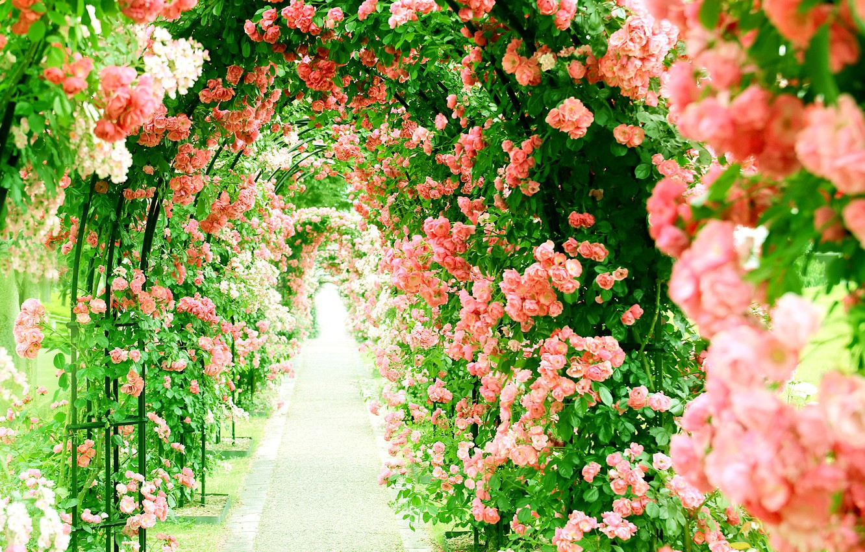 красивые фотографии цветочных аллей ограничиться оформлением