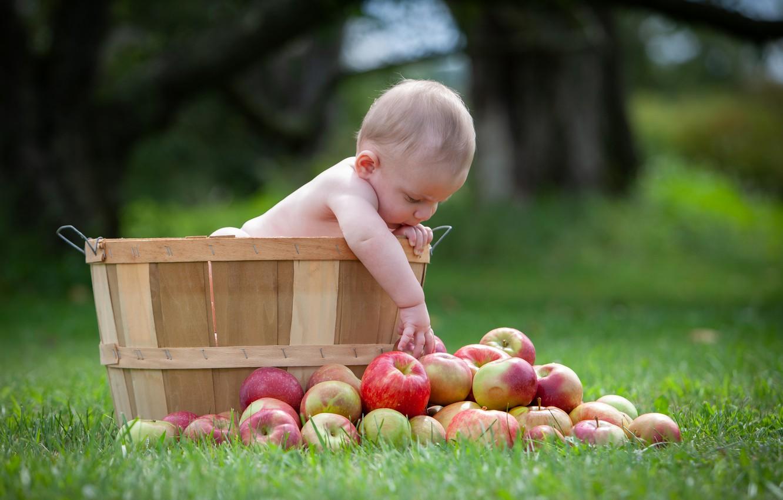 Фото обои трава, яблоки, малыш, ребёнок
