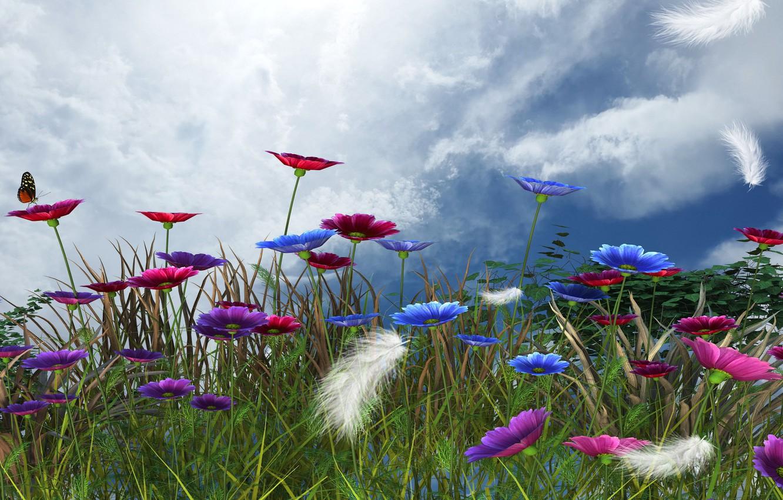 Фото обои небо, цветы, весна, пёрышки
