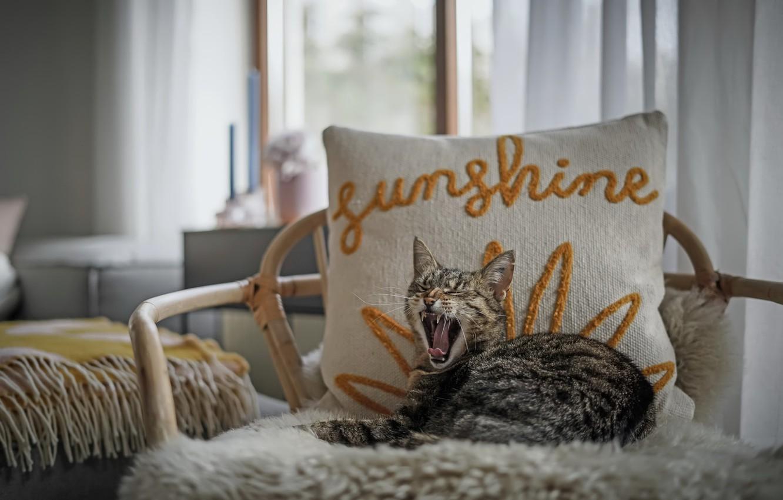 Фото обои кошка, дом, кресло