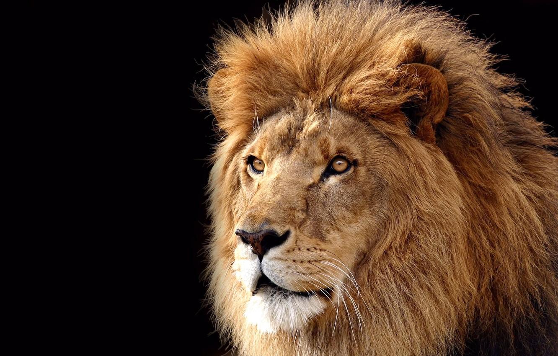 Фото обои Mac, Lion, OS