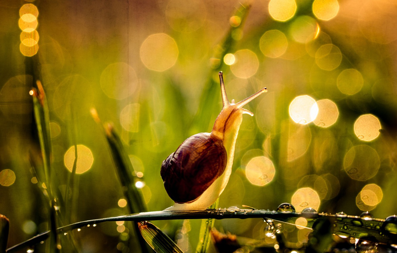Фото обои лето, трава, капли, макро, свет, природа, поза, капельки, роса, блики, сияние, фон, настроение, улитка, позитив, ...