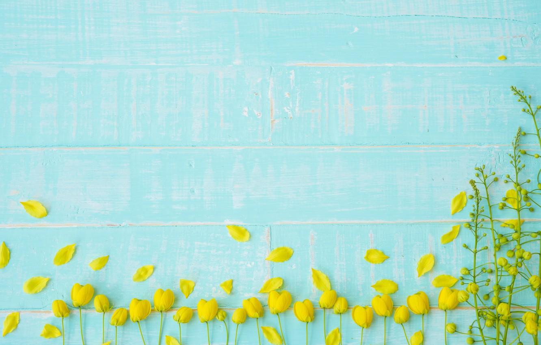 Фото обои цветы, фон, дерево, голубой, доски, желтые, лепестки, yellow, wood, blue, flowers, petals