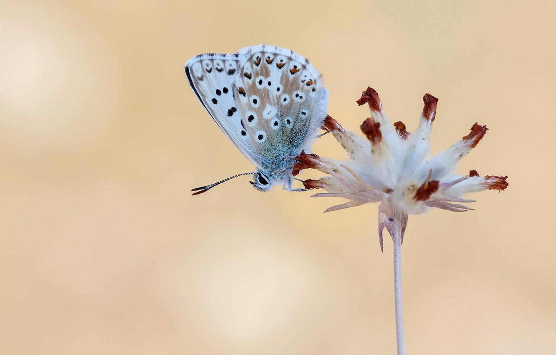 Фото обои цветок, макро, фон, бабочка
