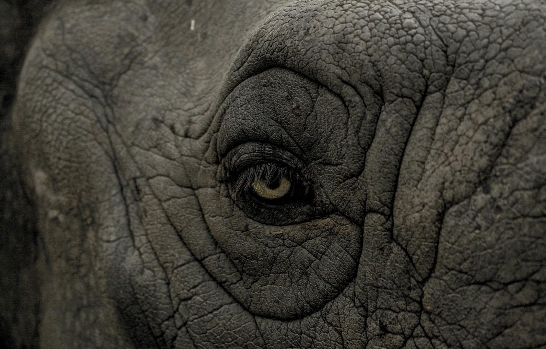 Фото обои rhino, eye, wrinkles