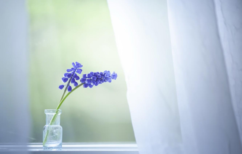 Фото обои цветы, дом, окно