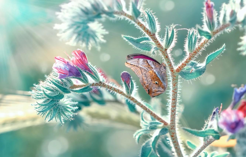 Фото обои макро, лучи, природа, бабочка, растение, боке, Mustafa Öztürk