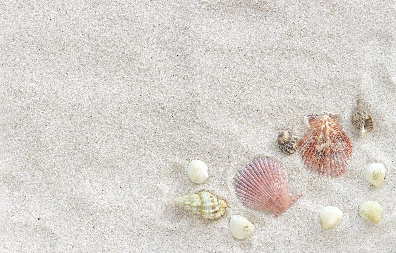 Фото обои песок, пляж, лето, ракушки, summer, beach, sea, sand, marine, seashells