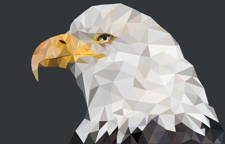 Фото обои america, eagle, beast, geometric