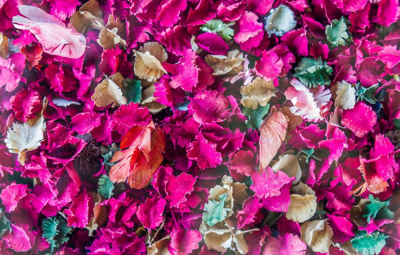 Фото обои листья, лепестки, colorful, сухие, leaves, purple, petals
