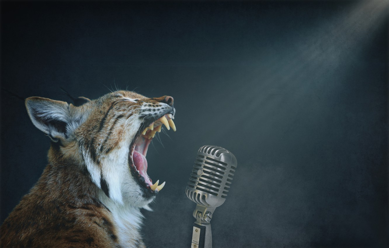 Фото обои фон, микрофон, рысь, пение