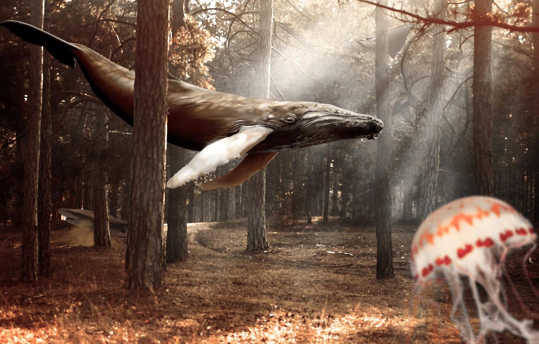 Фото обои лес, деревья, коллаж, медуза, кит