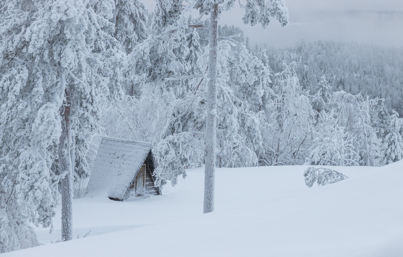 Фото обои холод, зима, лес, снег, пейзаж, природа, снежный, вид, ели, склон, мороз, сугробы, сосны, домик, сказочно, …