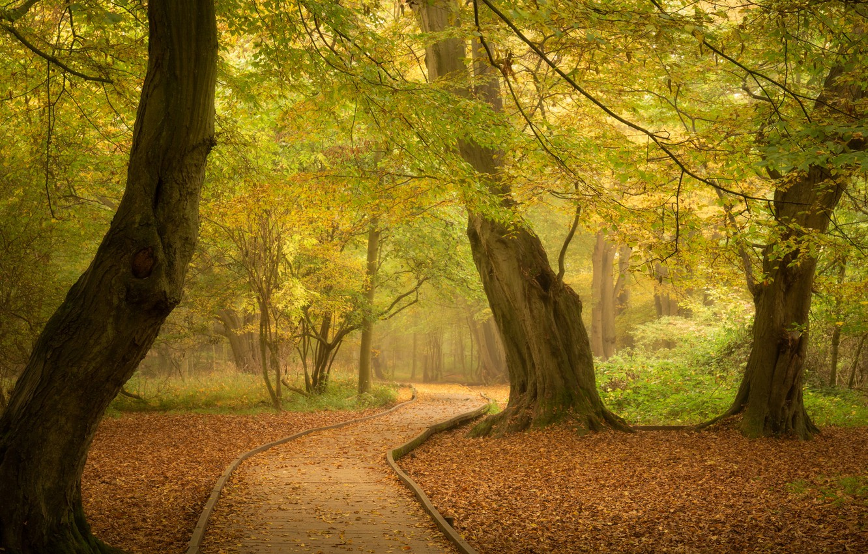 Фото обои осень, лес, деревья, парк, Англия, дорожка, тропинка