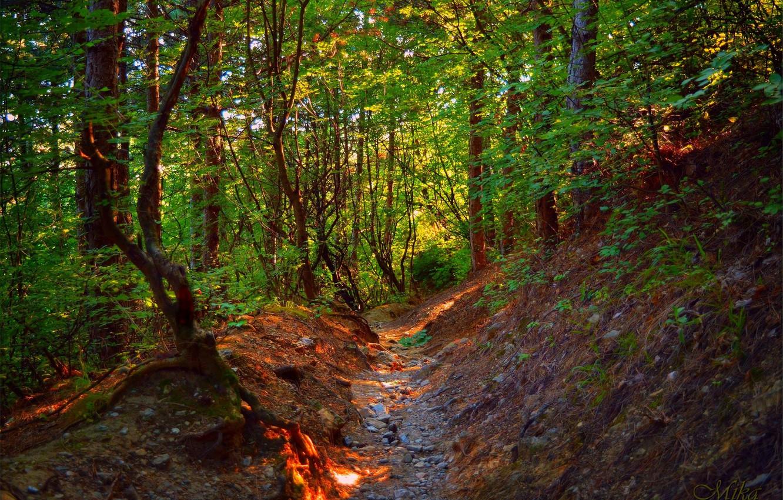 Фото обои Тропинка, Деревья, Лес, Forest, Trees, Path