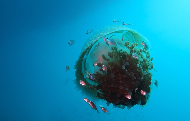 Фото обои море, вода, рыбки, рыбы, медуза, подводный мир, под водой, водоем, стайка