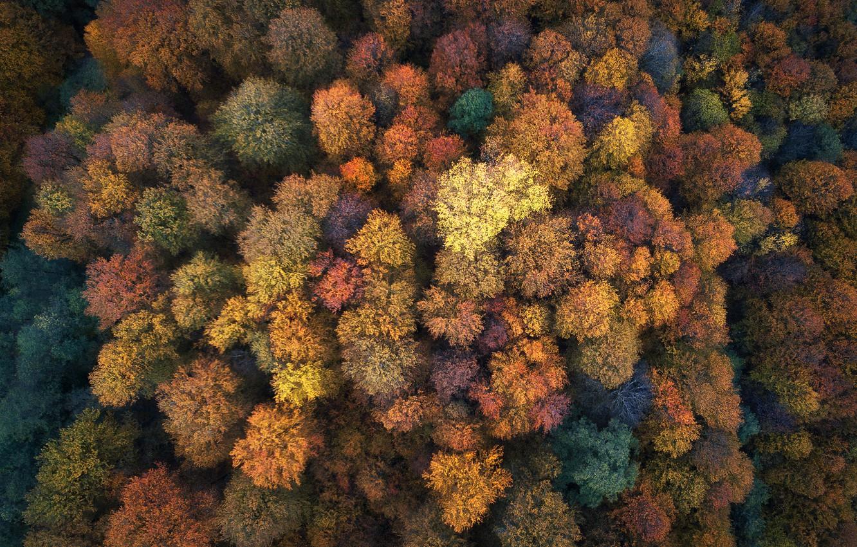 Фото обои осень, лес, деревья, природа, вид сверху