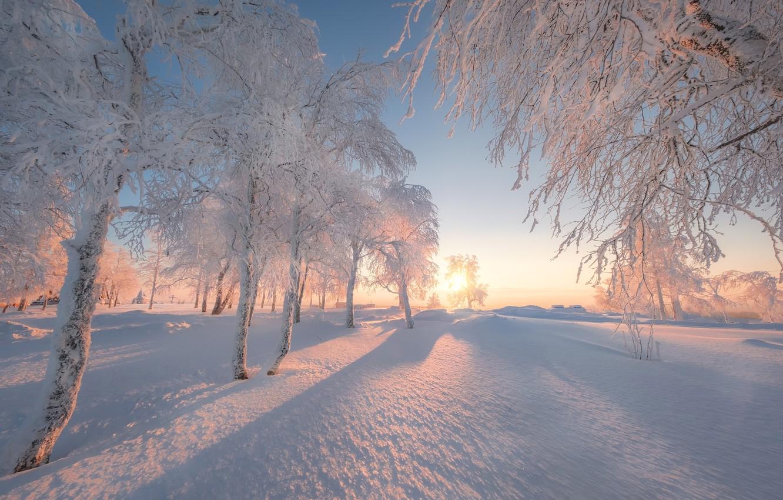 Фото обои зима, снег, деревья, рассвет, утро, Россия, Пермский край, Белая гора