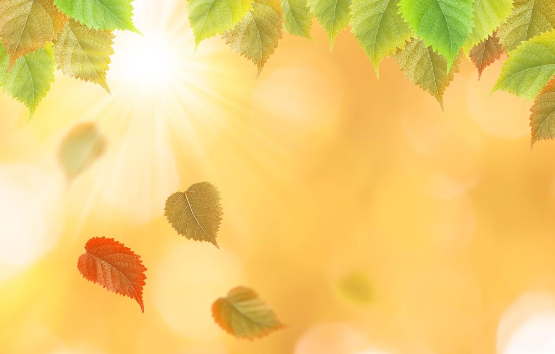 Фото обои осень, листья, желтые, colorful, yellow, autumn, leaves, осенние