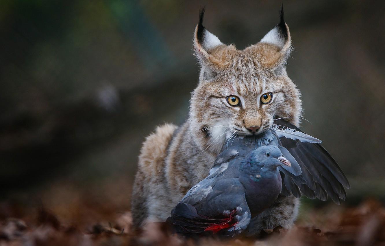 Хищники и добыча картинки