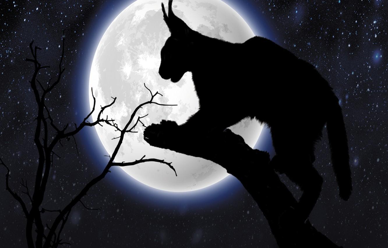 Фото обои cat, animal, midnight, starry nihgt, silhouettte