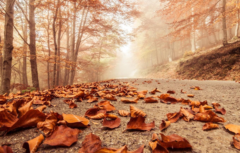 Фото обои дорога, осень, листья, туман