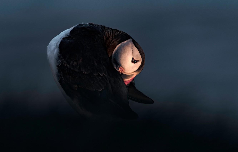 Фото обои свет, ночь, поза, темный фон, птица, тупик
