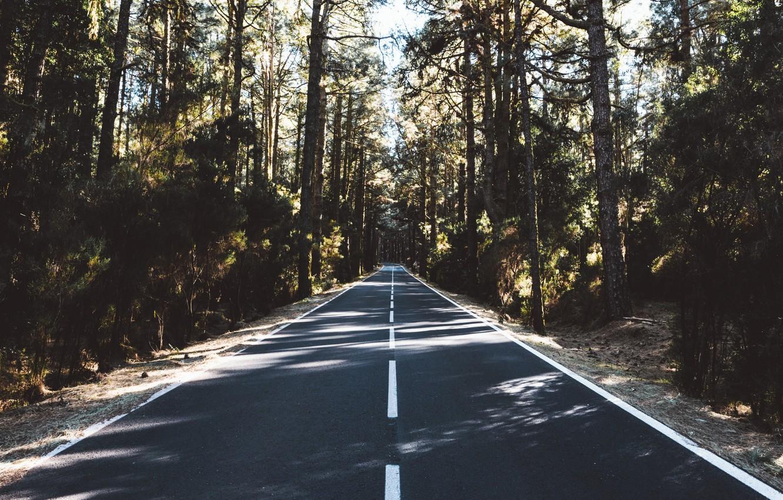 Фото обои дорога, деревья, природа, разметка, даль