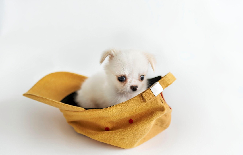 Фото обои фон, щенок, кепка