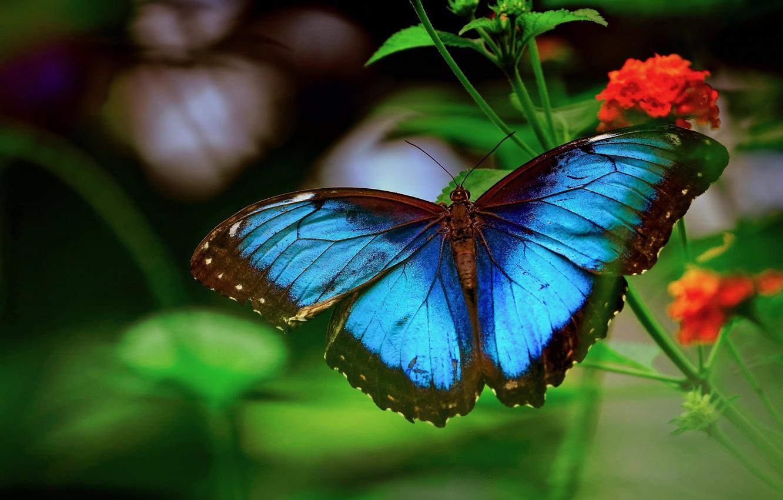 Фото обои макро, цветы, природа, стебли, бабочка, морфо